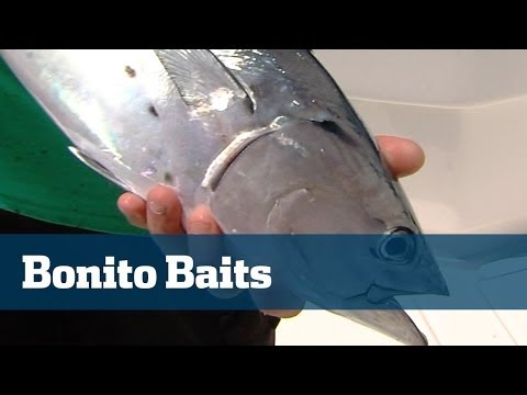 Tips For Catching Bonito One Of Florida's Most Important Baitfish