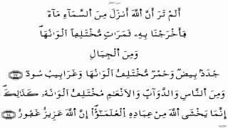 سورة فاطر - ياسين الجزائري برواية ورش