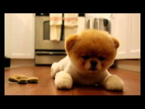X Factor 2011 I Like Dog Bobo Beatbox Youtube