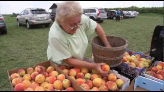Upick Michigan Peaches