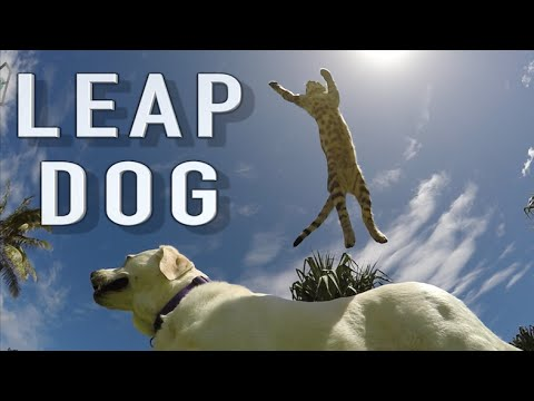 Boomer the Dog-Leaping Cat (Slow Motion)
