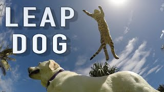 Boomer the DogLeaping Cat (Slow Motion)