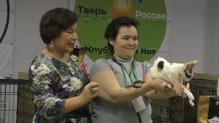Выставка кошек Тверь