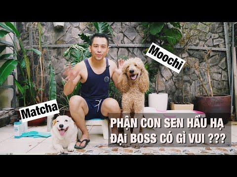 Sen tắm cho boss | Nuôi và chăm sóc 2 chú chó lớn có khó không ?