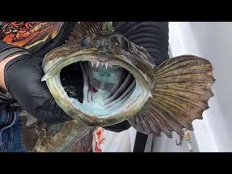 Morro Bay Ca Fishing Charter On The Endeavor Lingcod Fishing And Rockfish
