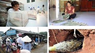Tin tức trong ngày - Nghề lạ ở Việt Nam kiếm tiền triệu