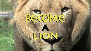BECOME A LION - Motivational Video (By Unkle Adams)