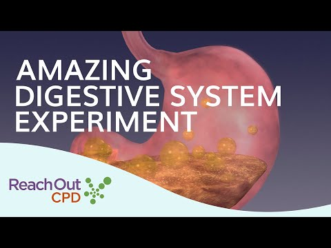 Lesson Idea: Digestive System