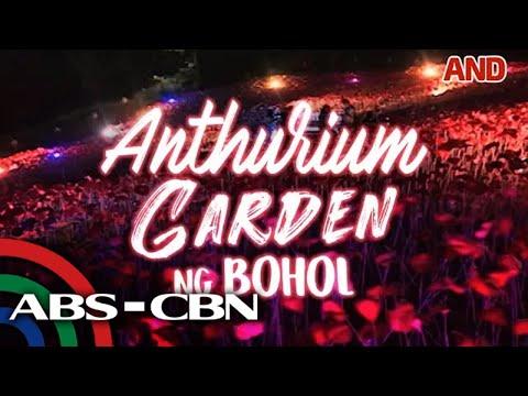 Anthurium Garden ng Bohol
