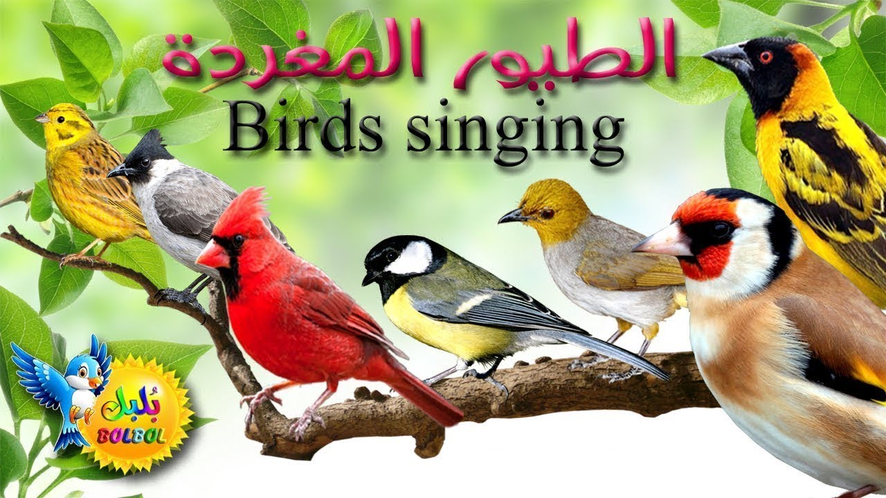 أسماء أجمل الطيور المغردة Name Of Birds And Sounds Learn Birds Name In Arabic English Language Youtube