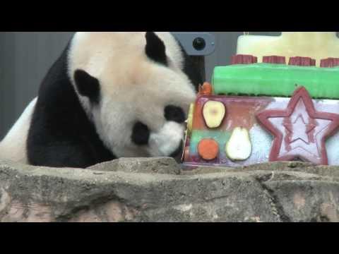B-Roll: Mei Xiang Enjoys Bei Bei's Frozen cake While He Sleeps in His Den