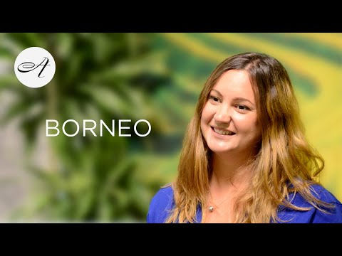 Our guide to Borneo