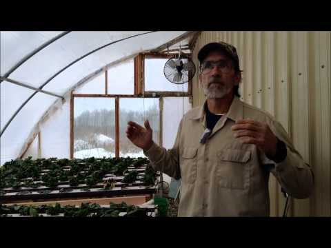 Hydroponics- A Future to Consider