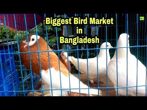 Biggest Bird Market In Bangladesh | The Biggest Bird Market Near Dhaka