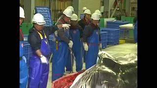 日本恢复商业捕鲸 捕鲸船载回小须鲸