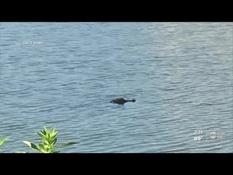 Pasco-man-saves-his-dog-from-an-alligator
