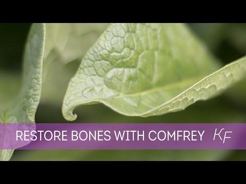 Comfrey - Restore Broken Bones Naturally with this Super Herb: Part I