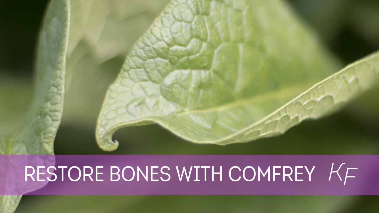 comfrey for broken bones