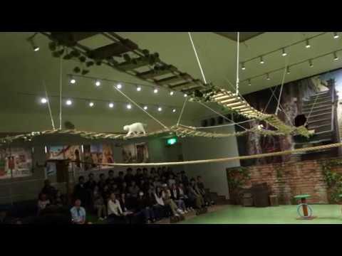 CAT SHOW(Circus) near Tokyo, Japan
