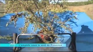 Les amandes de provence - 7 novembre 2012
