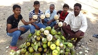 Eating Fresh Toddy Palm Fruit in My Village | Village Style Taati Munjalu  | Street Food Catalog