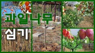 전원주택 텃밭에 과일나무를 심었습니다.