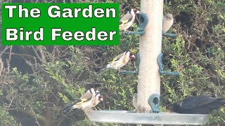 Garden birds visiting the Bird Feeder in our garden. How many species can you recognise?