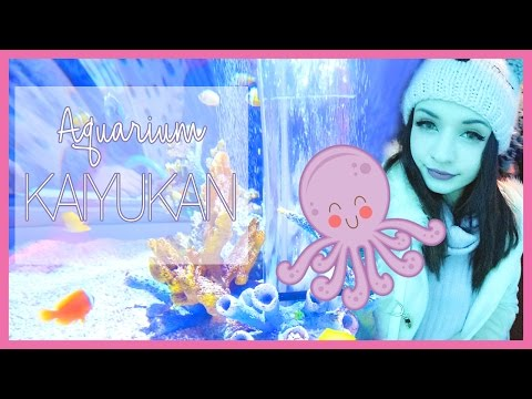 OSAKA AQUARIUM ☆ Day 10- Don Quijote Shopping & Cute Fish~ | Cece in Japan - 2016/17 ♡