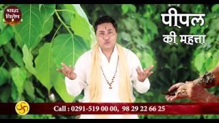 श्राद्ध पक्ष में पीपल सींचना (Pitra dosh) | Shradh 2018 | Pt. Suresh Shrimali