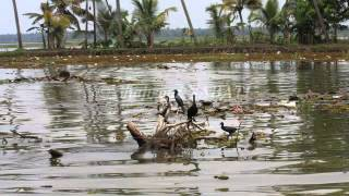 India, Kerala, Backwaters, Alapuzzha, Kottayam, Slideshows from around the world