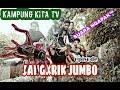 Jangkrik Jumbo Kampung Kita Tv Suara Ngapak  Mp3 - Mp4 Download