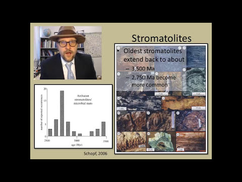 What are the major events in the history of life?