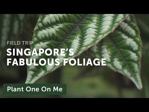 Singapore Botanic Garden Tour: Foliage Garden — Plant One On Me — Ep 132