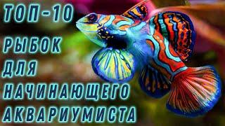 Топ - 10 рыбок для начинающего аквариумиста
