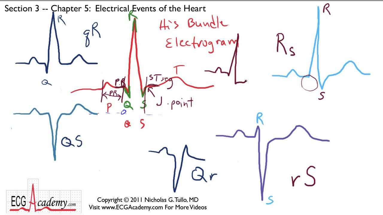 Electrical Events of the Heart 3-5 - ECG / EKG Interpretation ...