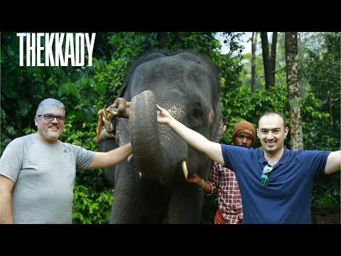 top-4-must-stay-resorts-in-thekkady,-kerala---#travelerschoice