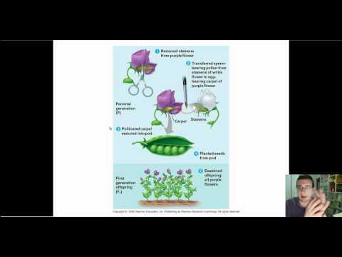 Mendelian Genetics (Part 6): Self & Cross Pollination, True Breeding, & Genetic Cross Template