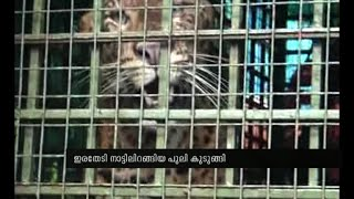Leopard held in forest cage near Angamaly