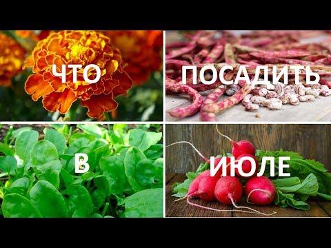 🌱Что посадить в ИЮЛЕ🌱Укроп, редис, огурцы, свекла, салат, редька, горох