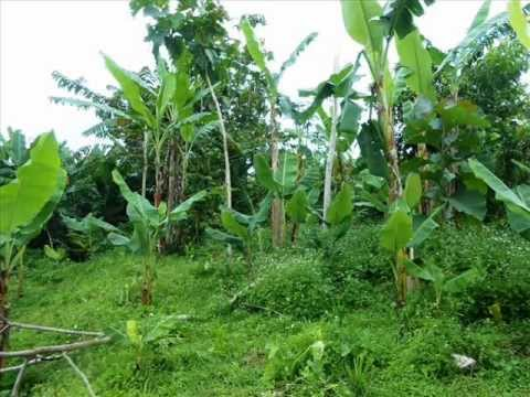 Property for sale in Bali, land for sale in Ubud Bali - TJUB201