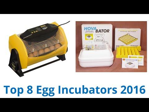 8-best-egg-incubators-2016