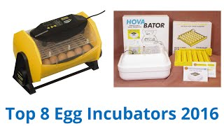 8 Best Egg Incubators 2016