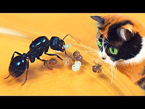 Как рожают муравьи