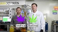 How It's Made: Cannabis Full Spectrum Oil