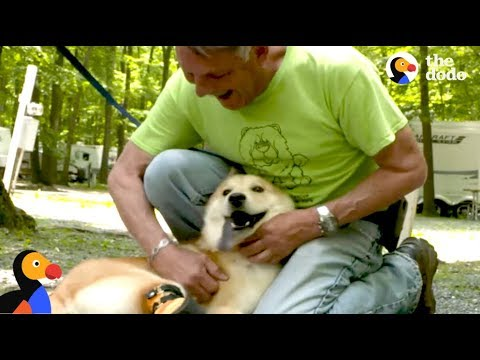 Man Drives Across the Country to Rescue SPECIAL Dog | The Dodo: Comeback Kids