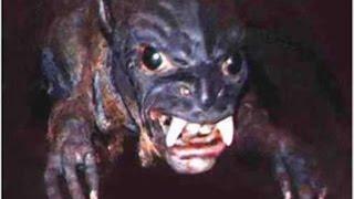 Найти чупокабру,которая пьет кровь домашних животных