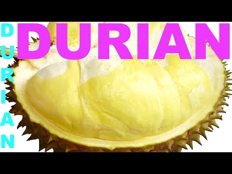 DURIAN, HOW TO OPEN DURIAN FRUIT, HOW TO CUT DURIAN, WOMAN OPENS DURIAN NO GLOVES, TROPICAL FRUIT