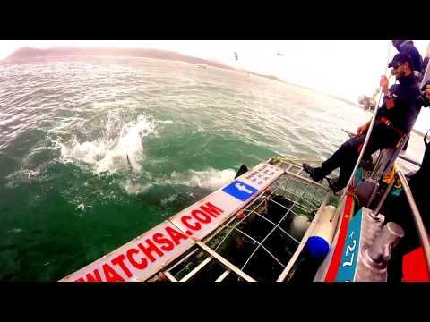 Marine Dynamics Shark Cage Diving