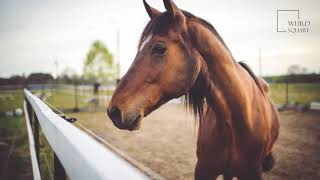 Horse   An animal with a 50-million-year long evolutionary process