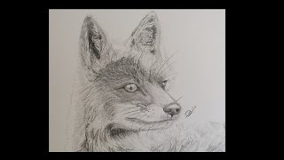 Artic Fox Speed Drawing / Time Lapse ~ Palmix Art®